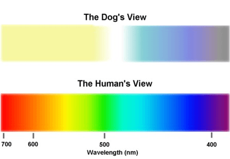 dogs view