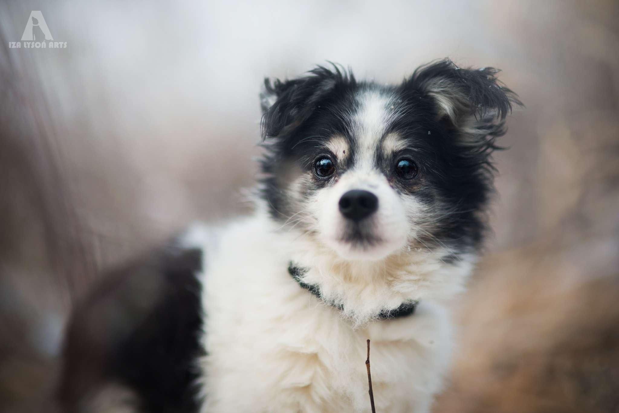 Dzięki zdjęciom wykonanym przez Izę i udostępnieniu ich na blogu Karmimy Psiaki puszek i kilka innych psiaków znalazło nowy dom!