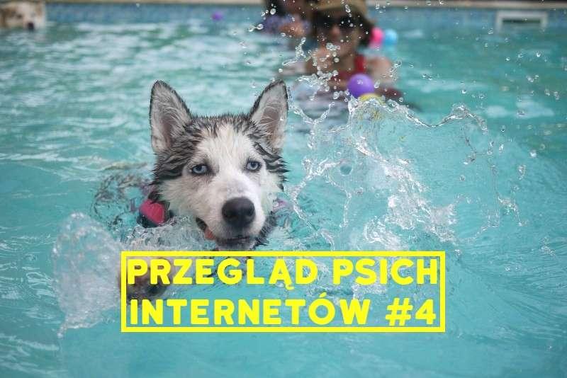 siberian-husky-swimming-in-pool