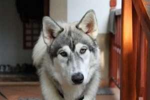 dog-432426_1920