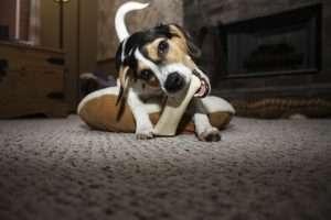 pies zabawka