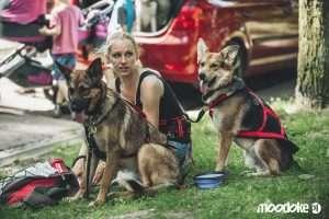 zdjęcie psów