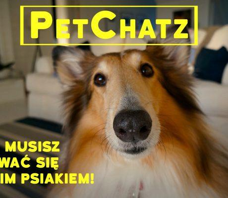 petchatz - zdjęcie psa