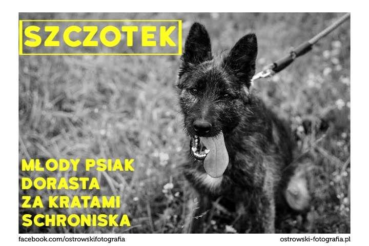 psiak Szczotek