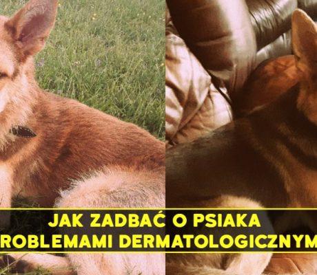 pies - przed i po