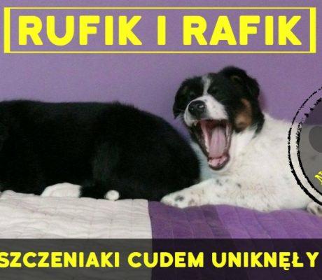 Rufik i Rafik