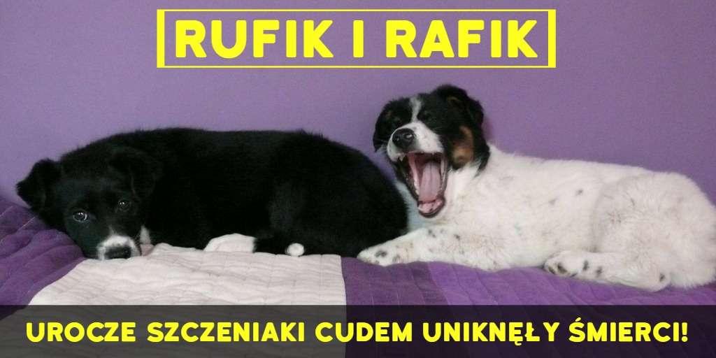 Rufik i Rafik - szczeniaki