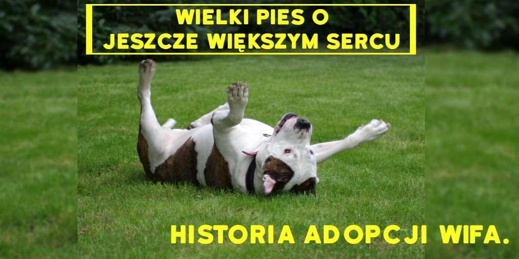 zdjęcie Wifa