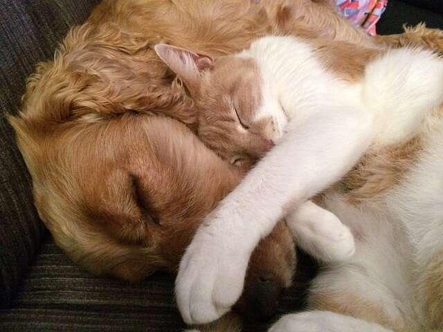 Jak Pies Z Kotem Czy Taki Związek Ma Przyszłość Blog Karmimypsiaki