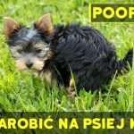 Pooper App – czyli jak zarobić na psiej kupie