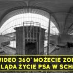 screen wideo 360
