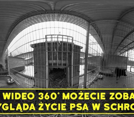 screen wideo 360