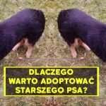 Dlaczego warto adoptować starszego psa? Historia adopcji Roxy