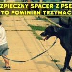 Bezpieczny spacer z psem, czyli kto powinien trzymać smycz