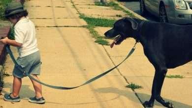 spacer psa i dziecka