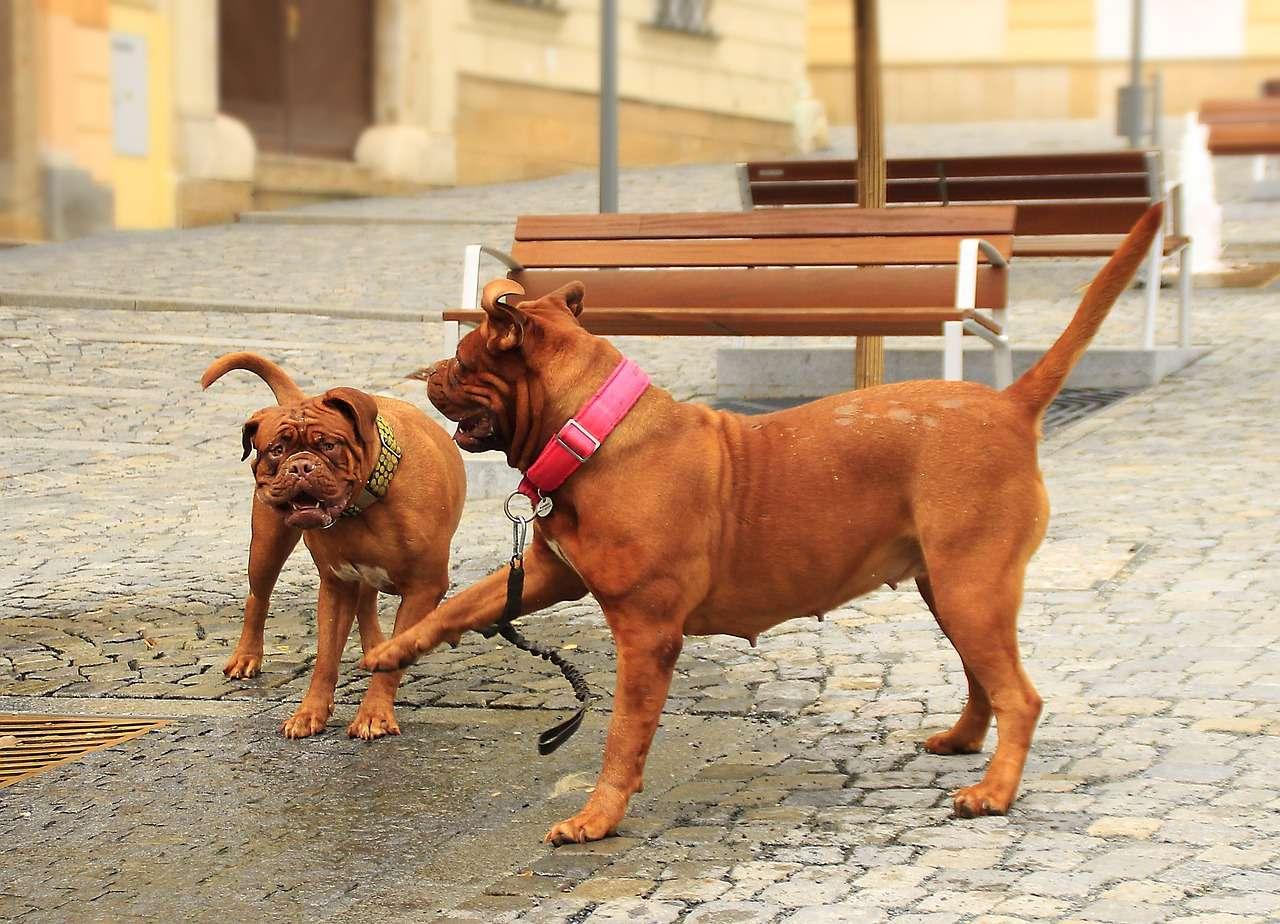 psy na ulicy