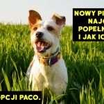 Nowy pies w domu – najczęstsze błędy i jak ich uniknąć. Historia adopcji Paco.