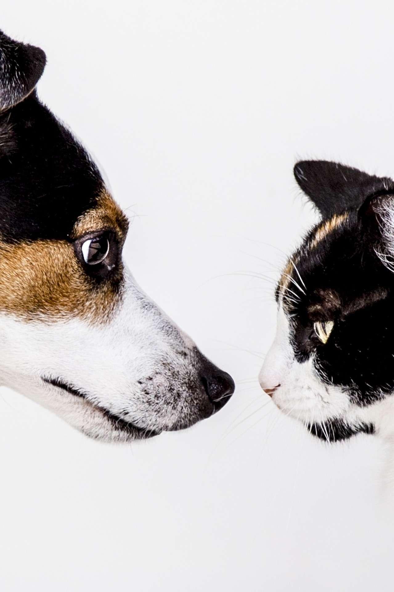 pies i kot
