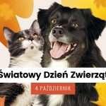 Daj prezent Kociakom i Psiakom w schroniskach!