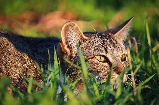 kot polowanie