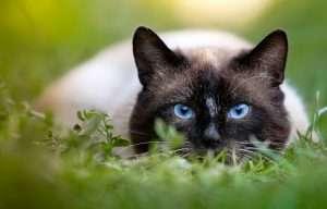 kot na polowaniu