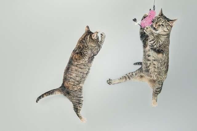 koty zabawa