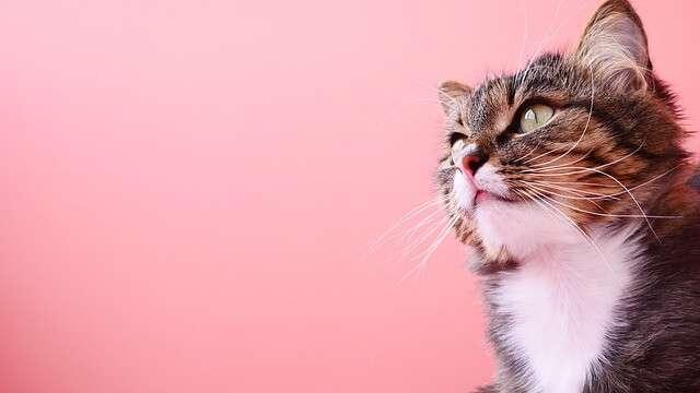 odrobaczanie kota