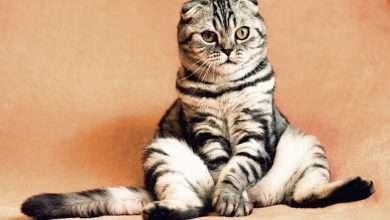 kastracja kotow