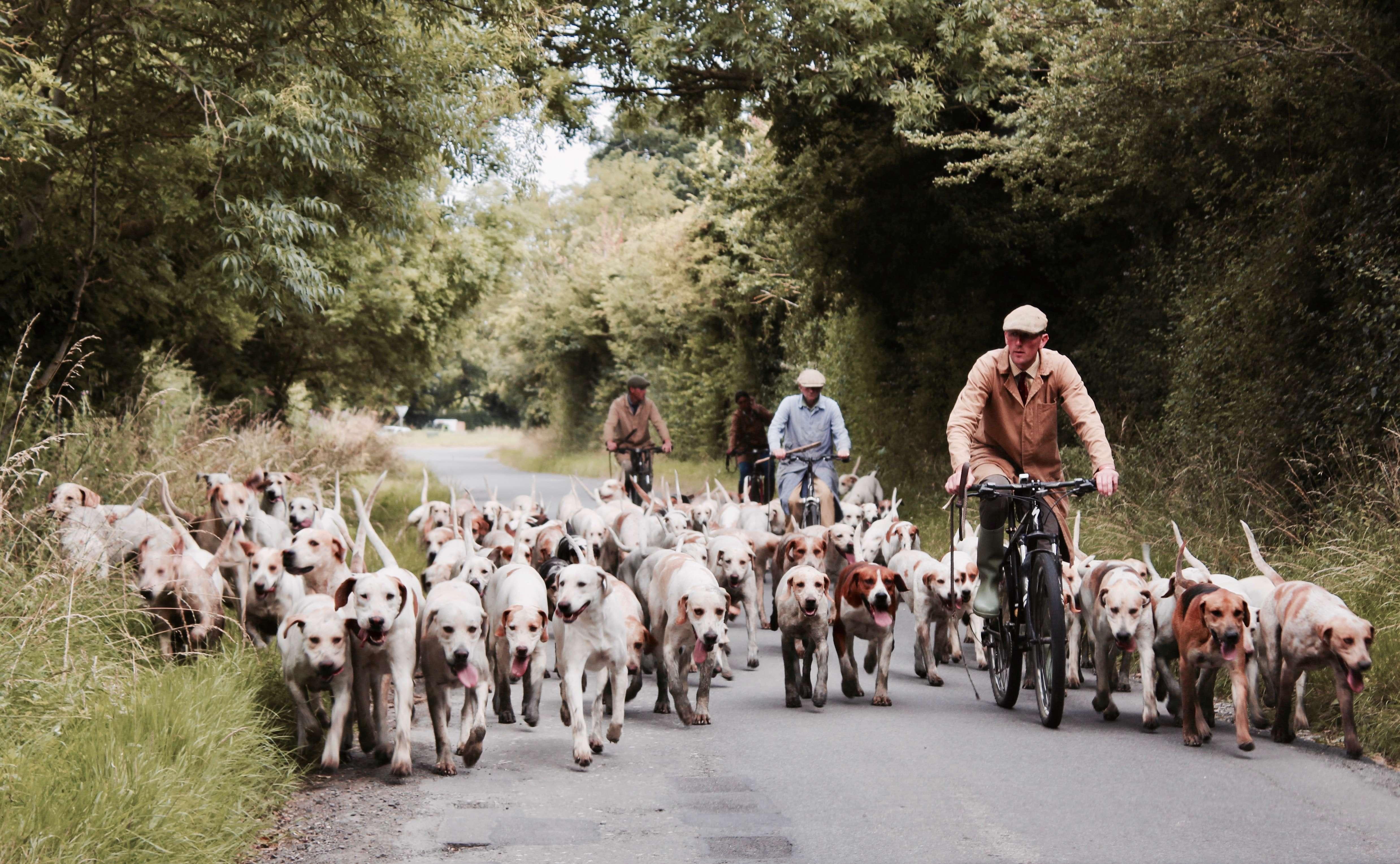 socjalizacja psa z innymi psami