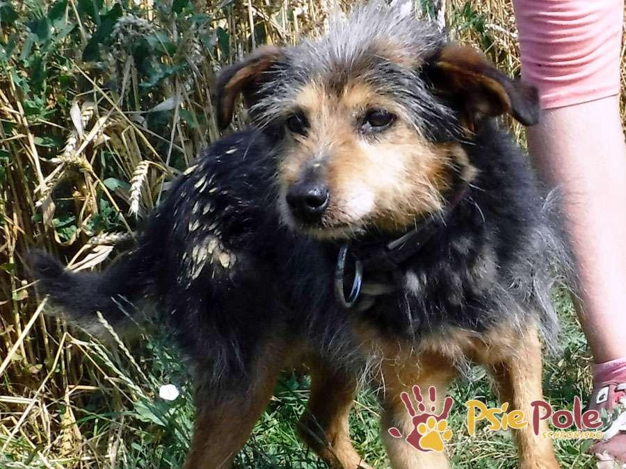szuszu pies do adopcji