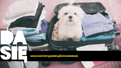 co zabrać na wyjazd z psem