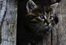 imiona dla kota