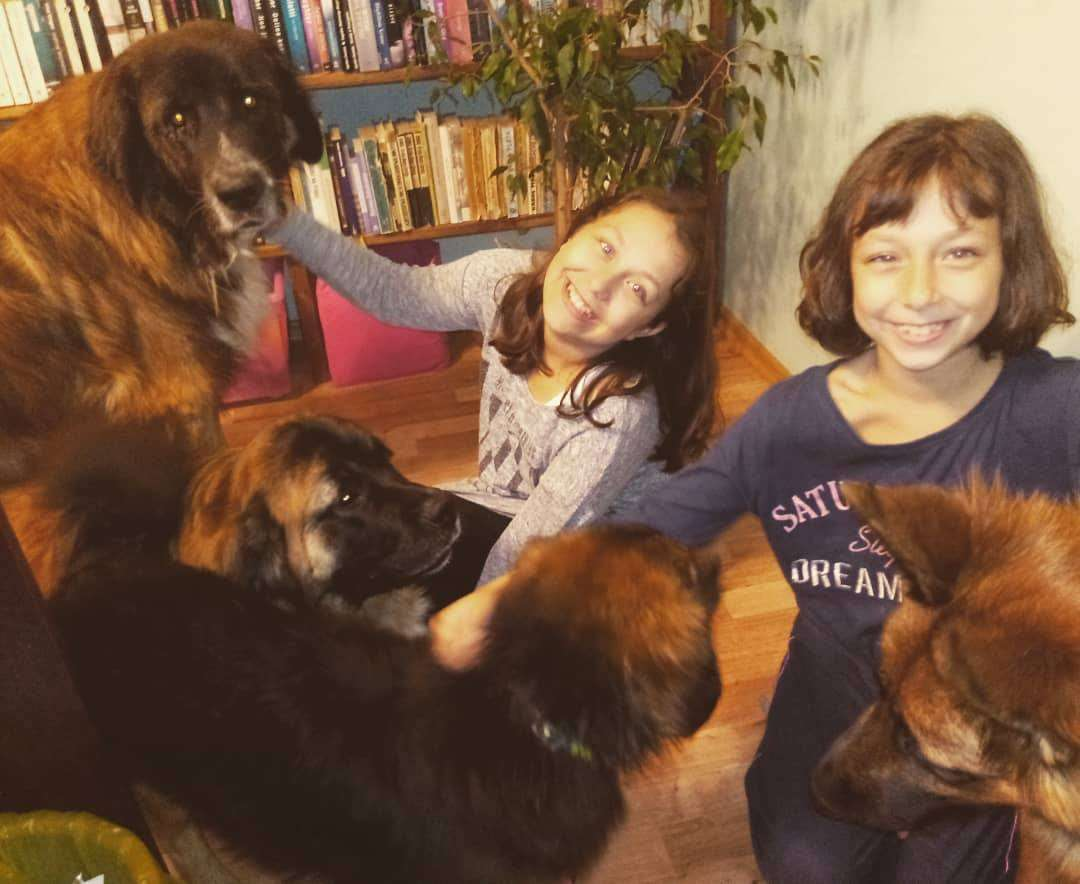 cztery psy