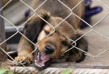 psi uciekinier