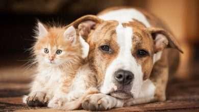 zakażenia u psów i kotów - gronkowce