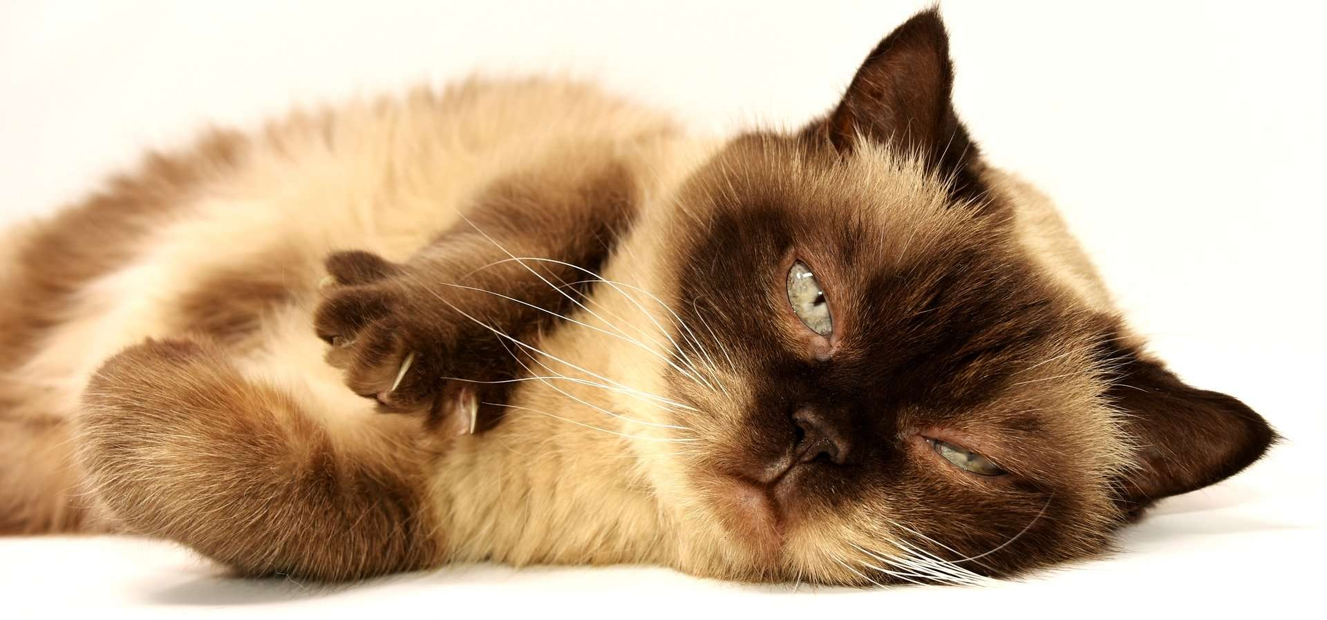 złośliwość kotów