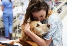 Pies w szpitalu ukojeniem dla chorych