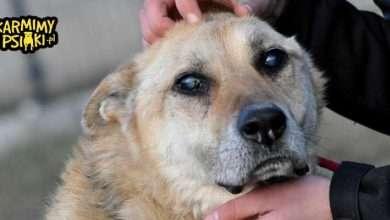 Jak pomagać zwierzętom? Pies