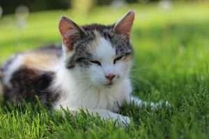 kot leżący na trawie