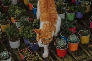 kot z roślinami