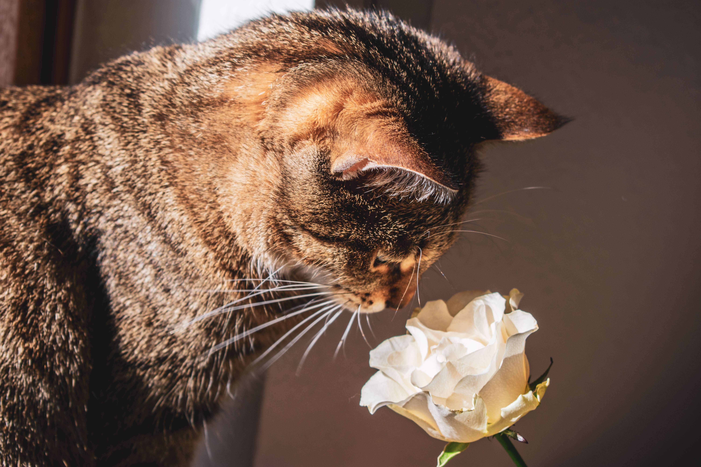kot z kwiatkiem