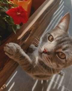 kotek z kwiatkiem