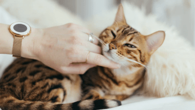 głaskanie kota