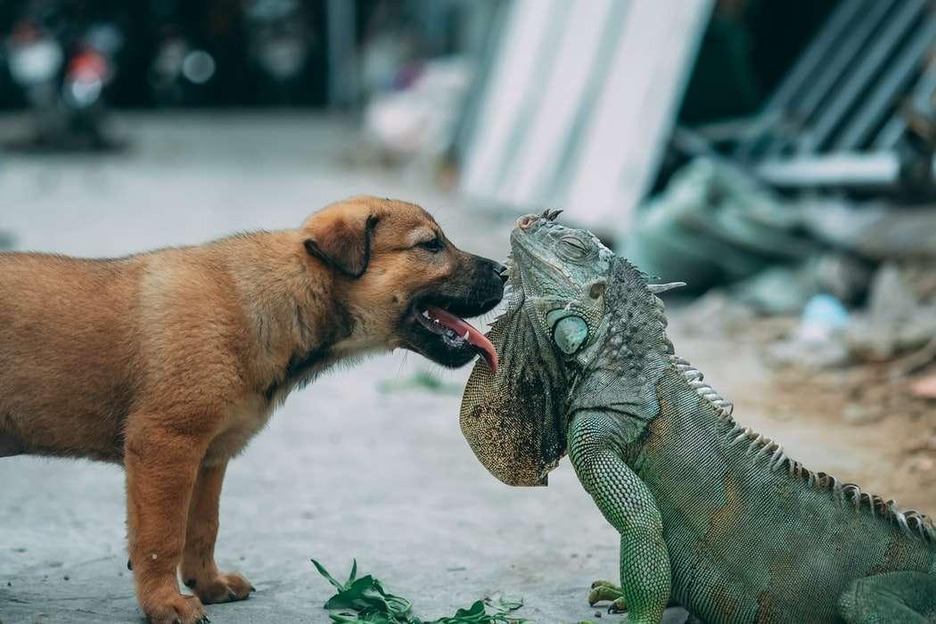 przyjaźnie międzygatunkowe