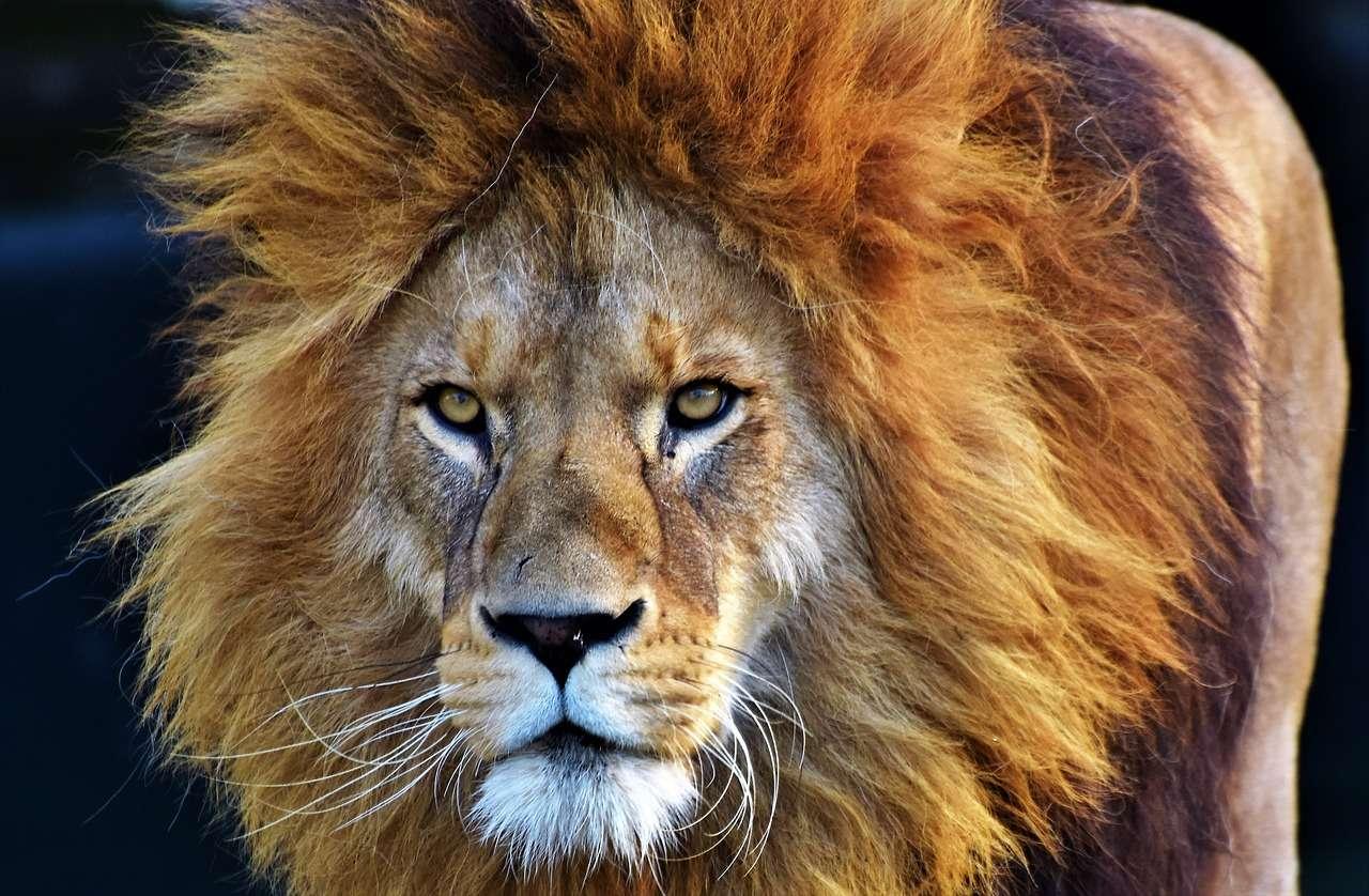 lwy uratowały