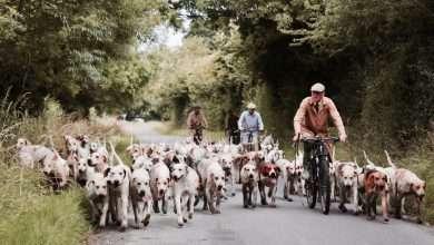 na rower z psem