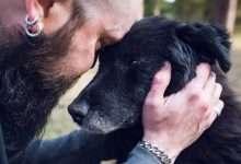 odnaleziony pies