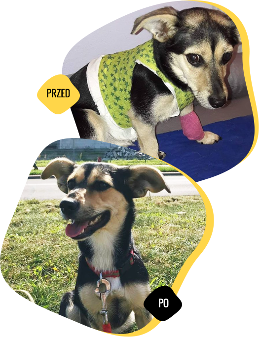 animal named Czacza before and after the help