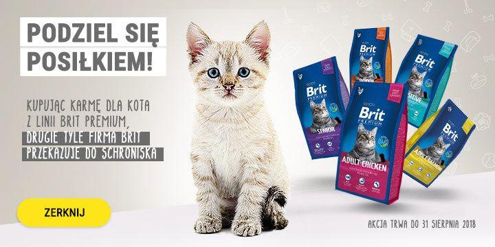 Akcja Brit = mnożymy dobro!