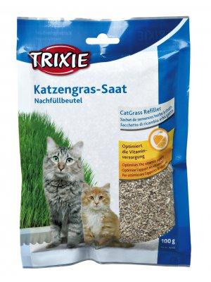 Trawa dla Kociaka w pojemniku